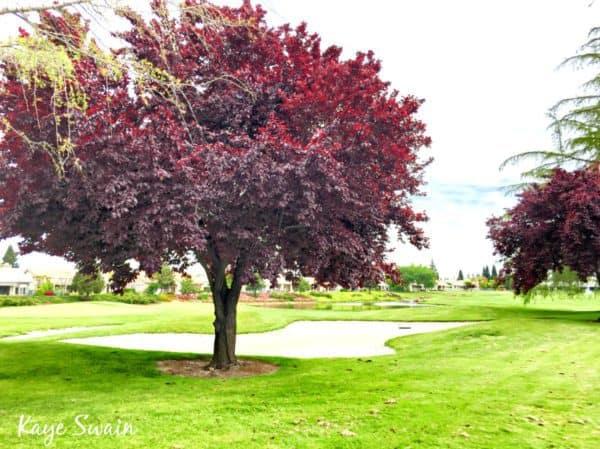 Boomer senior transition probate specialist Kaye Swain sharing Sun City Roseville golf course