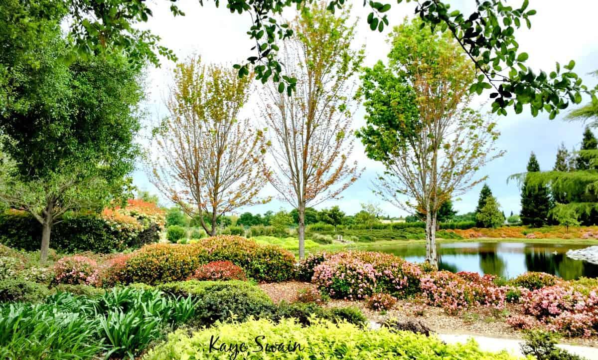 Sun City Roseville Features Active Senior Living Joys