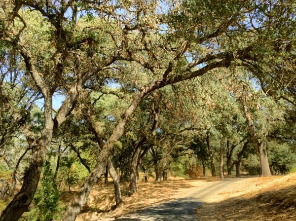Roseville Sun City CA autumn walking in one of the parks and preserves areas by Kaye Swain Real Estate Agent