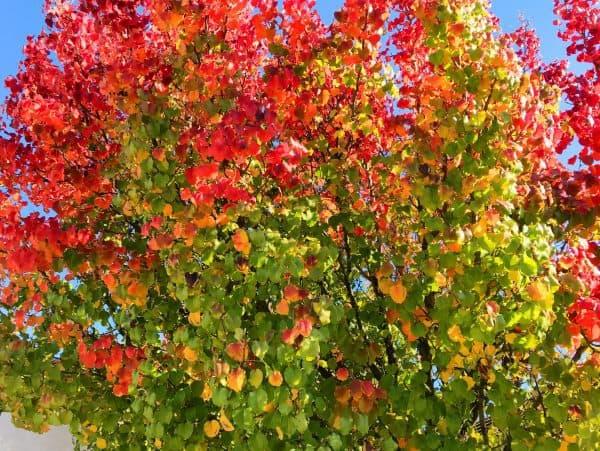 Sun City Roseville CA Bird Sanctuary and golf retirement community showing off autumn colors