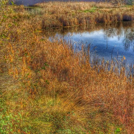 Another lovely shot of the wetlands by Jacks Urban Eats off Sierra College Blvd in Roseville CA by Kaye Swain REALTOR copy
