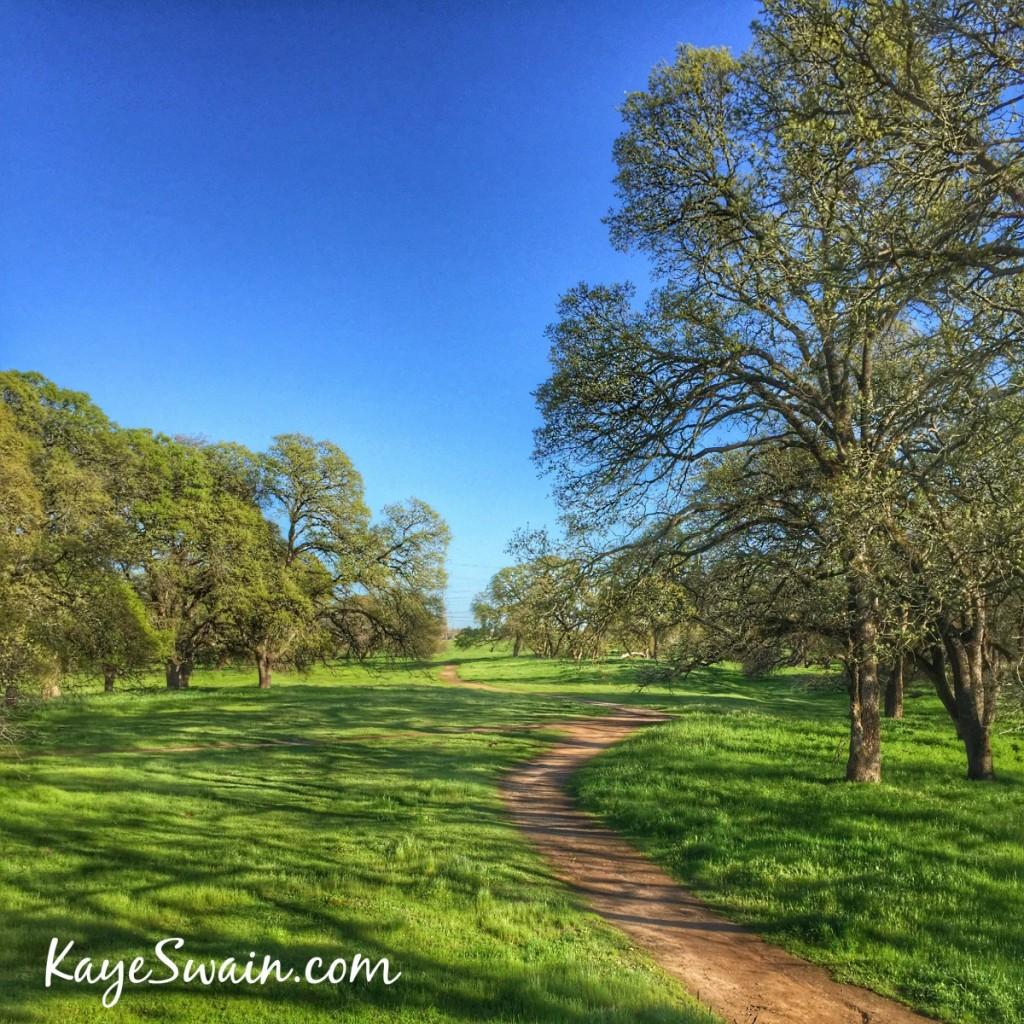 Kaye Swain Roseville CA REALTOR sharing the joys of the Sacramento Roseville area