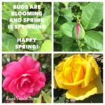 Kaye Swain Says Happy Spring 2016