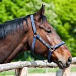 Lincoln CA has lovely equestrienne options for horse lovers
