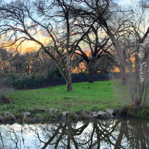 Kaye Swain Roseville REALTOR sharing sweet sunset
