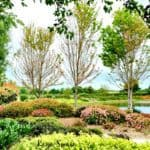 Kaye Swain boomer senior transition probate real estate specialist sharing Sun City West Roseville CA 95747