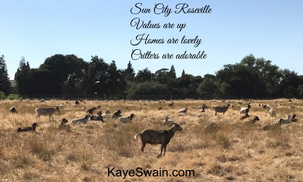 Roseville Sun City real estate and cute critters update