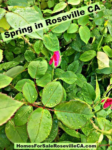 Spring in Roseville CA