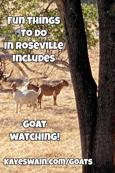 Kaye Swain Roseville REALTOR sharing fun things to do in Roseville CA include goat watching