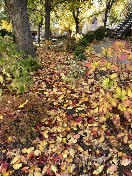 Love fall but do not want to rake - check out these Rocklin condominiums