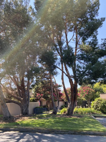 Beautiful homes in Fair Oaks by Kaye Swain real estate agent