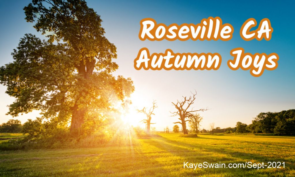 Oaks-turn-their-colors-slowly-but-it-is-truly-autumn-in-Roseville-with-cooler-temps