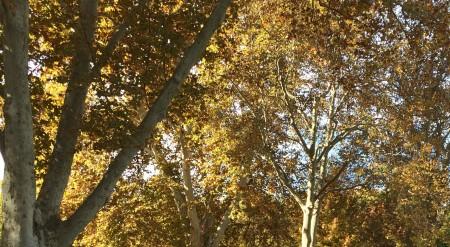 Autumn joys in the Roseville Sacramento CA area via real estate agent social media blogger Kaye Swain blog