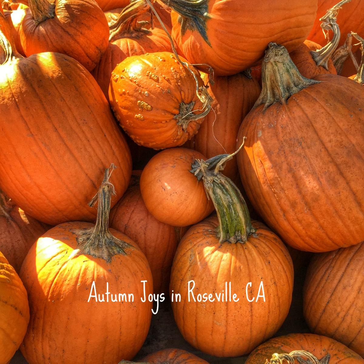 Autumn joys spotted at Green Acres in Roseville CA via REALTOR Kaye Swain blog