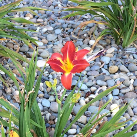 I love seeing drought-wise yards with rock or bark and native flowers Kaye Swain Roseville CA REALTOR
