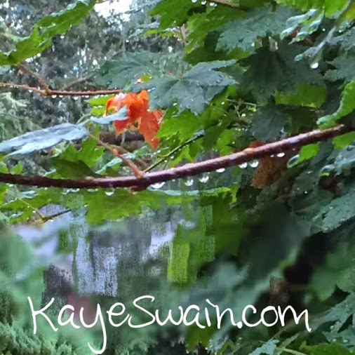 I-would-love-to-share-some-of-this-lovely-rain-with-my-Roseville-California-friends-Kaye-Swain-REALTOR (1)