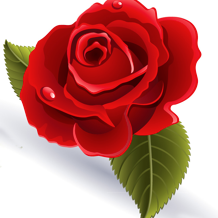 Kaye Swain REALTOR in Roseville CA loves red roses