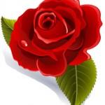 Kaye-Swain-Roseville-CA-REALTOR-loves-roses