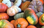 Lovely pumpkins all around Roseville CA via Kaye Swain real estate agent blog.jpg