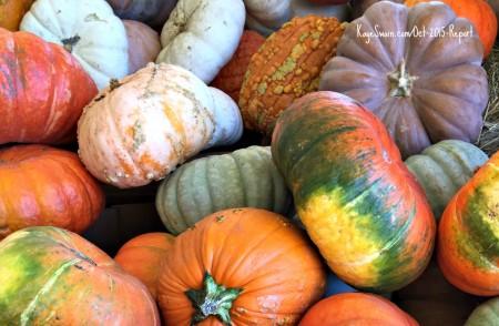 Lovely pumpkins all around Roseville CA via Kaye Swain real estate agent blog.jpg