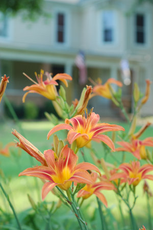 One of my fave old homes for sale long ago with its spring daylilies via Kaye Swain Roseville Sacramento REALTOR