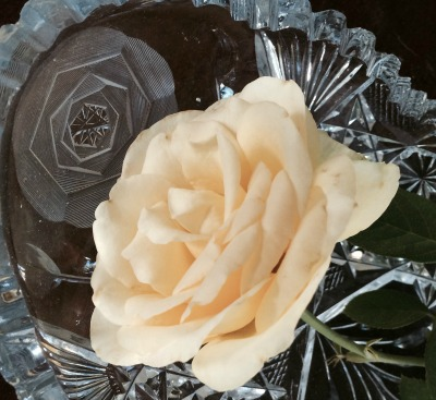 The beauty of a crystal tea party cookie holder and a Roseville CA rose via Social Media Blogger and REALTOR Kaye Swain