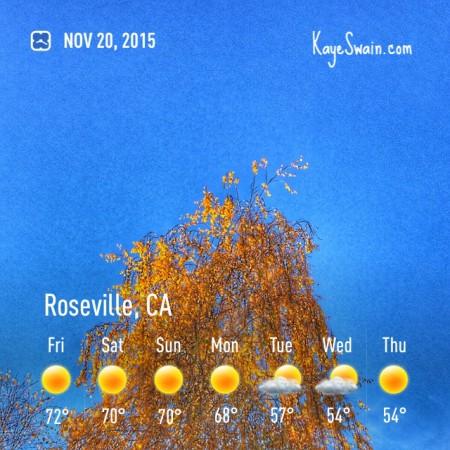 My granddog weatherman for Kaye Swain Roseville CA real estate agent blogger